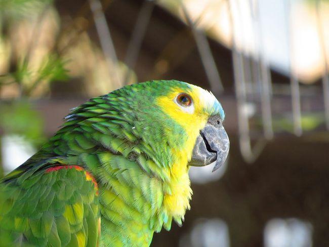 No Filter Papagaio Sx50hs Animals