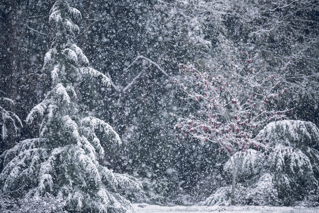 Snow in Georgia! <3 Snow ❄ Trees Backgrounds Close-up Cold Temperature Day Freshness Landscape Motion Nature No People Outdoors Season  Snow Snowflake Snowing Winter