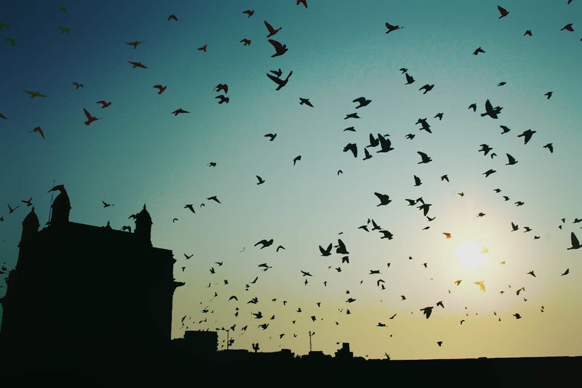 Avian Beauty In Nature Bird Blue Cloud Colaba Day Flock Of Birds Flying Gatewayofindia Hues India Low Angle View Mum Mumbaimerijaan Nature No People Outdoors Silhouette Silhouettes Sky Sunrise Sunset Wildlife First Eyeem Photo