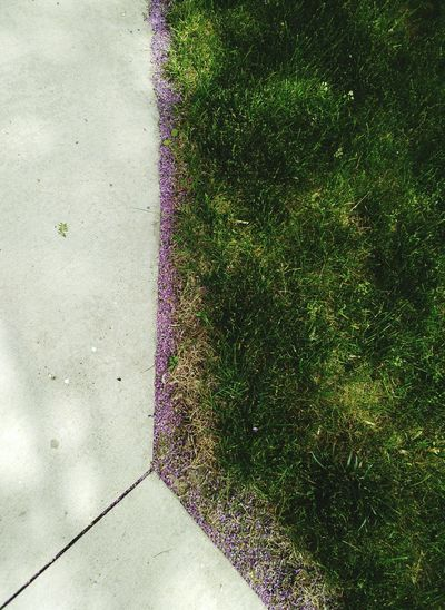 Sidewalk Green Grass Flowers Bay City Puremichigan City Hall Purple Angles Lines Beautiful Nature Great Outdoors
