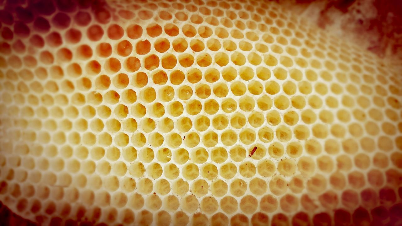 honeycomb, beehive, backgrounds, hexagon, pattern, close-up, textured, no people, full frame, animal themes, apiculture, bee, day