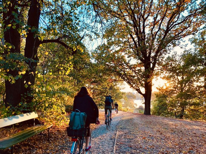 Rear View Of People Riding Bicycles Amidst Trees During Autumn