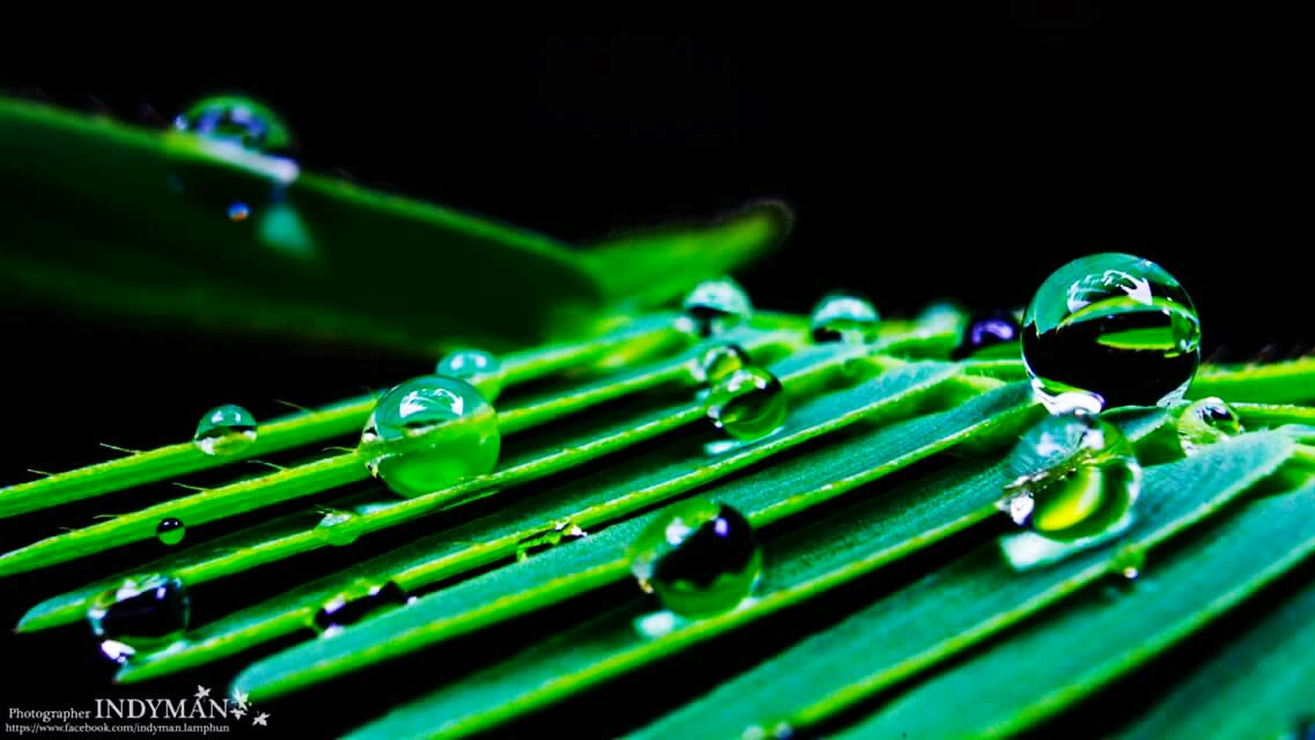 green color, drop, water, close-up, selective focus, wet, focus on foreground, no people, outdoors, animal themes, green, day, full frame, blue, nature, in a row, backgrounds, metal, detail, shiny