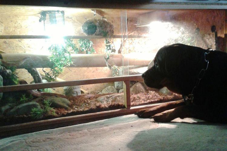 Der Ast, der Wurm die Kornnatter da is doch was , Beobachten Spaß Haben  Mit Meinem Hund Enjoying Life @Home Things I Like Discover Berlin