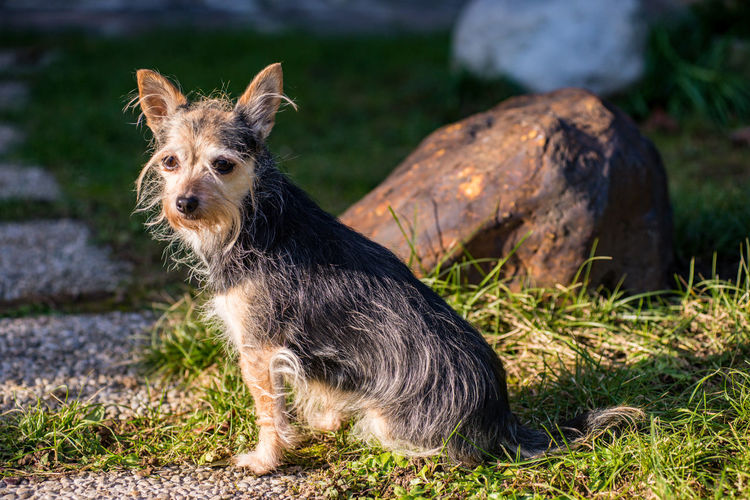 One Animal Mammal Domestic Animals Domestic Pets Dog Canine Portrait Looking At Camera Nature Grass No People Sitting Plant Day Focus On Foreground Outdoors