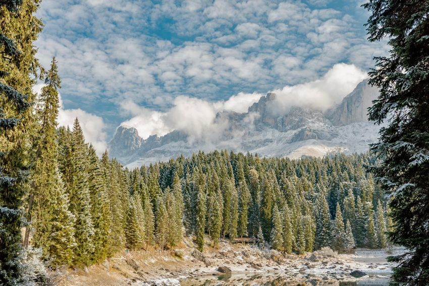 Beauty In Nature Day Forest Landscape Mountain Mountain Range Nature No People Outdoors Pinaceae Pine Tree Pine Wood Pine Woodland Scenics Snow Tree Tree Area
