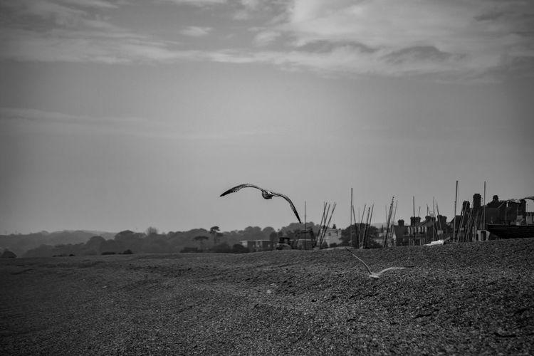 Birds on field against sky