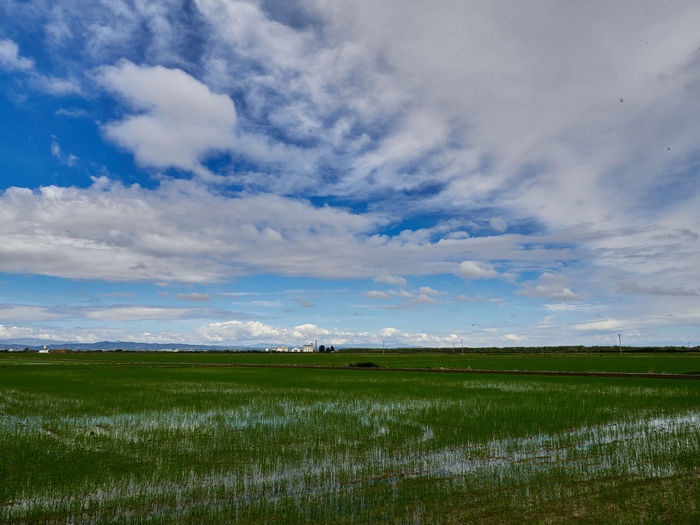 View of the rice fields near the lagoon of valencia, spain. on a cloudy day in early june