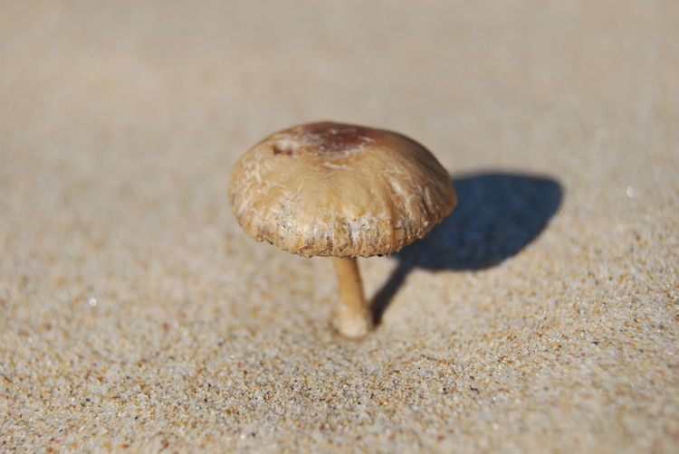 Close-Up Of Brown Mushroom Growing In Sand