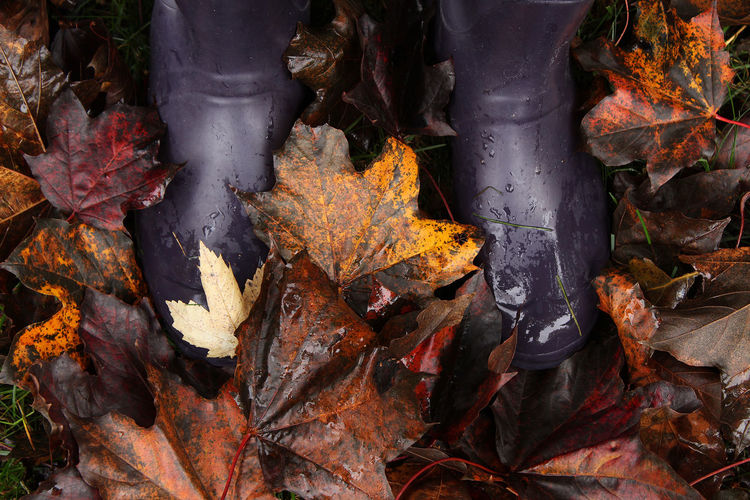 Rainy day feet Autumn Autumn Leaves Foot Wear  Nature November October Rain Boots Rainy Days Weather Autumn Change Colorful Day Fall Fallen Leaves Feet Forest Leaf Lush Foliage Maple Leaf Nature Outdoors Season  Selective Focus Wet