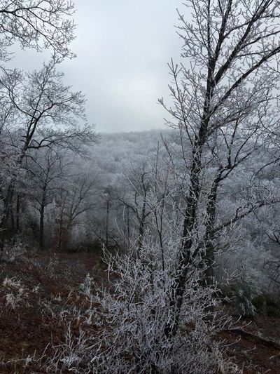 Winter Snow Frost Frosty Mornings Winter Wonderland Tennessee Appalachian Mountains