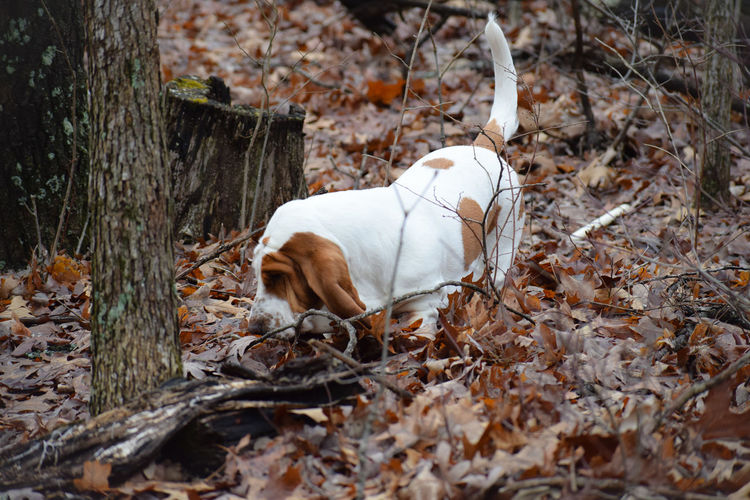 Dog on dry leaves in forest