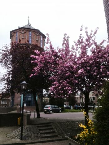 Just a nice view. 🤗 Tree Flower Outdoors Building Exterior Architecture Pink Color No People Built Structure Springtime Day Sky Clear Sky City Water Tower Water Tower With Houses In It. Lgg4photography Made By Noesie Parkingplace Cars Art Is Everywhere The Secret Spaces EyeEmNewHere The Week On EyeEm