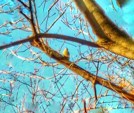 Tree Low Angle View Branch Bare Tree Sky Nature No People Outdoors Day Clear Sky Perching