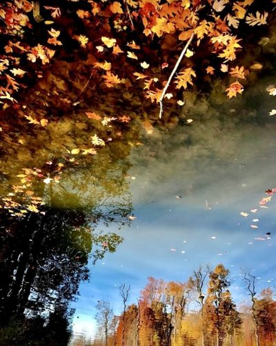 Low angle view of autumn leaves in lake against sky
