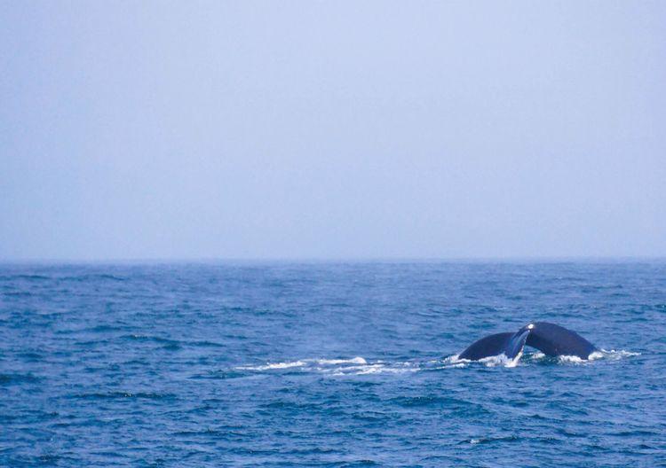 Whale Monterey EyeEm Best Shots Streamzoofamily