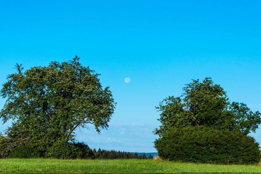 Moon in the Morning Nature On Your Doorstep EyeEm Best Shots - Nature EyeEm Nature Lover Eye4photography  EyeEm Gallery