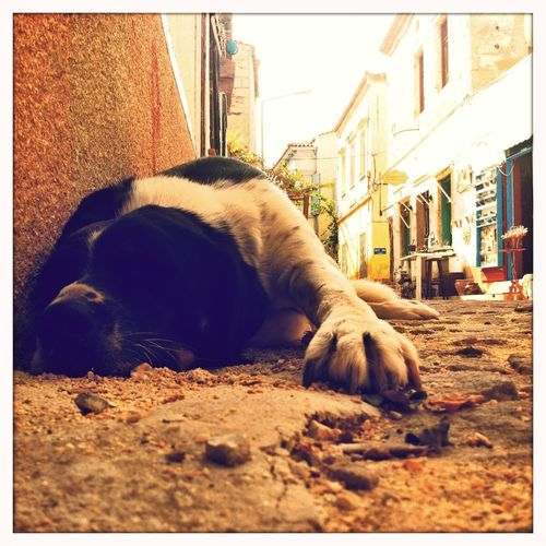 EyeEm Best Shots The Story Behind The Picture Fragments Of Life Dogs sleeping under heavy noise pollution caused by Vespa-Cycles in Hacimemis neighbourhood of Alacati. a classic.