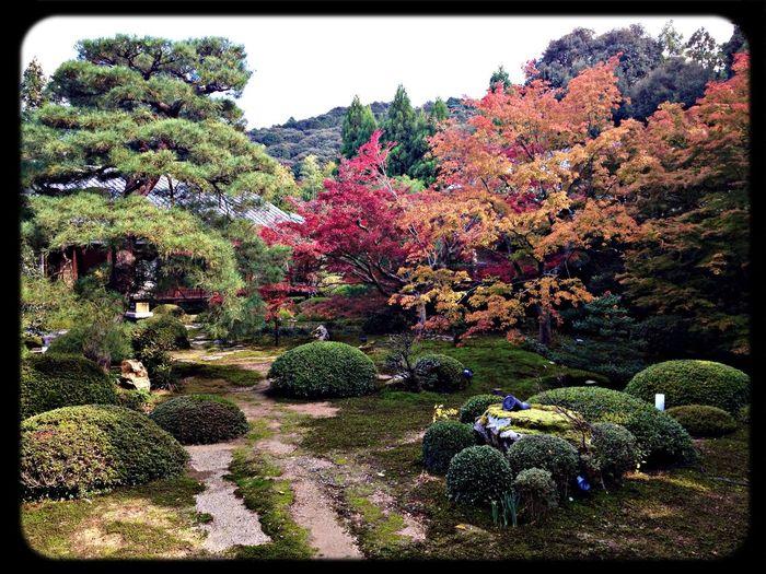 雲龍院 庭園 The Purist (no Edit, No Filter) Taking Photos Temple Garden
