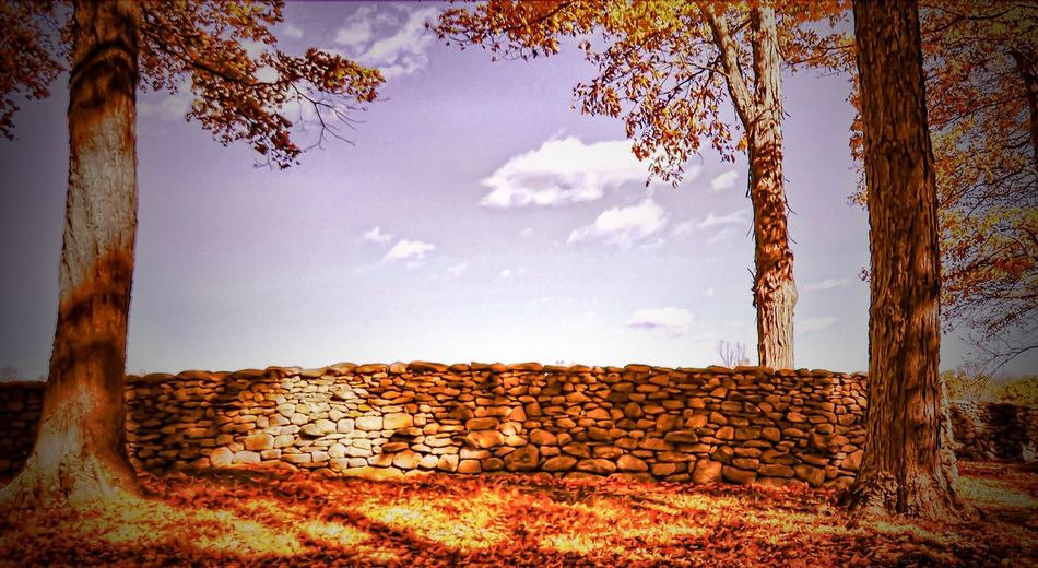 Sky Nature No People Outdoors Tree Day Cloud - Sky Beauty In Nature Wall Stone Wall Midday Serene Outdoors Light And Shadow Idyllic Scenics Leaves Cloud Relaxing Everydayscenes