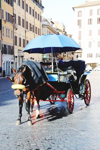 Rome, Italy Rom Horse Transportation One Animal Domestic Animals Horse Cart Mode Of Transport Day Outdoors