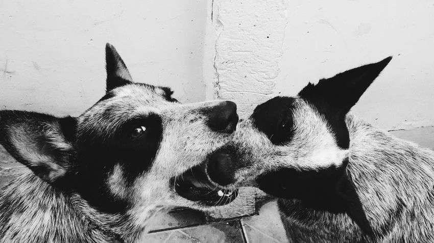 Dogs Animal Themes Dog Pets Dogs Of EyeEm Blackandwhite Black And White Black & White Blackandwhite Photography Animal_collection Animals Domestic Animals Animal Photography