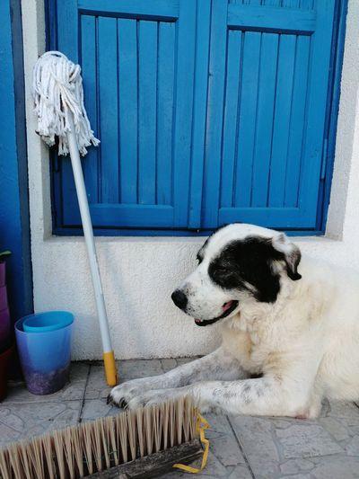 Dog lying on entrance
