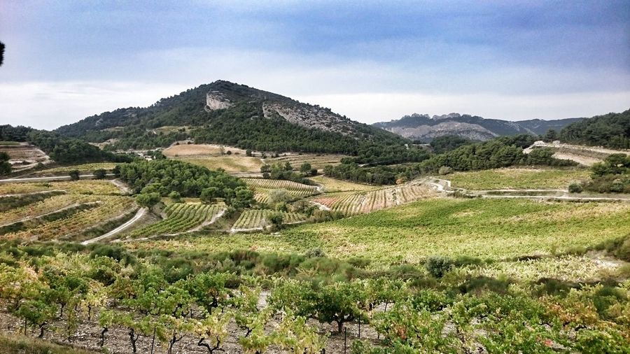 Landscape Mountain Scenics Vines
