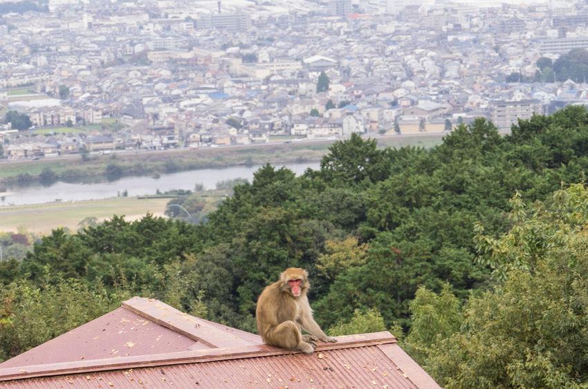 Arashiyama Japan Japan Photography Kyoto Monkey