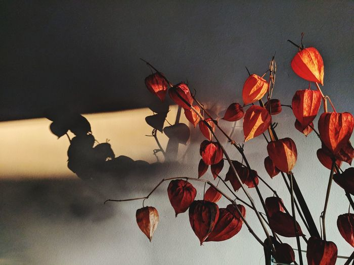 Lazy Saturday afternoon. It's 3PM and also golden hour since it's November. Shadow Afternoon Sunset Golden Hour Still Life Flower Close-up Sky Plant Life Sun Sunbeam Orange Color Silhouette In Bloom