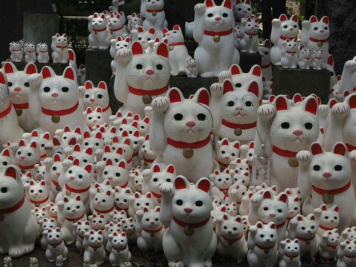 Cat Cute Manekineko Taking Photos Landscape Streetphotography Japan Photography Cats Japanese Temple Cute Cats