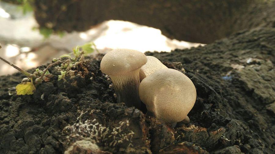 Mushrooms! First Eyeem Photo