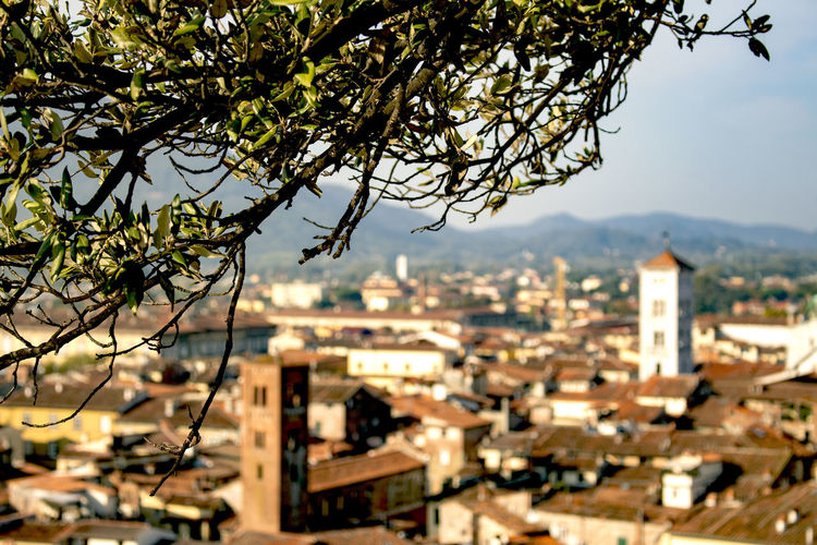Lucca Italy Tree View From Above Sunshine Morning Natureview Fromnature Tocity