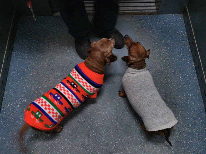 High Angle View Shoe Adults Only Human Body Part Pair One Man Only Adult Human Leg Low Section Outdoors One Person Day Couple Dogs Dachshund Sweaters Dogs In Sweaters Jumpersuit Jumpers  Streetphotography Street Photography Real People Winter