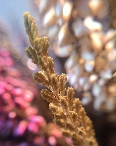 Dept of field 🌸🍂flowers. Deptoffield Dof Splendid_dof Flowers Macrophotography Photograph Photographer ArtOfLiving Living Beautiful Journey Nature Naturephotography Bestshot VSCO Vsconature Vscomoment Vscodof Vscothailand Thailand Deadcrap