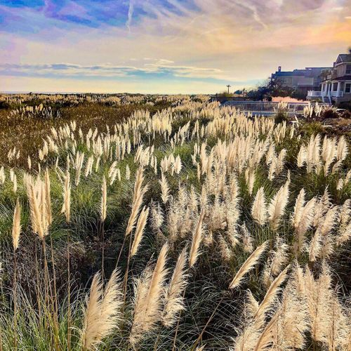 Beach walk sea oats Beach Sea Oats Sky Cloud - Sky Nature Architecture No People Built Structure Building Exterior Town Tranquil Scene Outdoors Beauty In Nature Environment Landscape Tranquility Land Plant Scenics - Nature