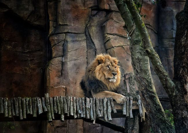 London zoo is a lovely place, there are such wonderful environments for the animals. Animal Wildlife Animal Themes LONDON❤ Malephotographerofthemonth Photography Is My Escape From Reality! Nikon Photography Atmospheric Mood Nikon Beauty In Nature Zoo Londonzoo ZSL London Zoo