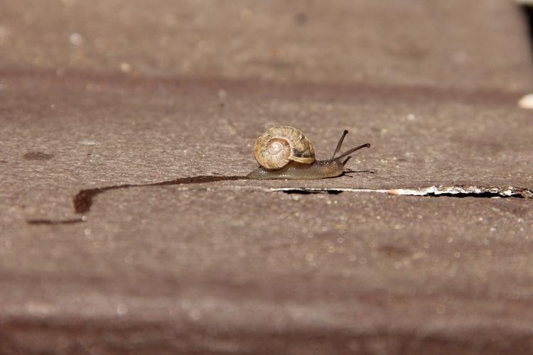 A morning snail