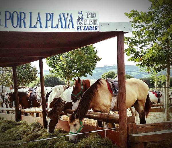 Caballos Norte De España Spain ✈️🇪🇸 Summer Verano 2015 Laredo Cantabria Spain First Eyeem Photo