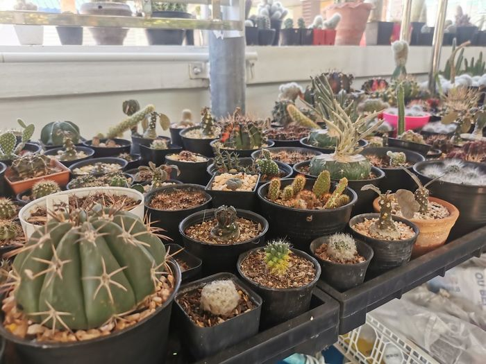 Potted plants for sale at store