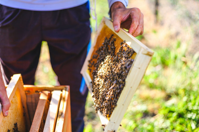 Working with Nature Adult Agriculture APIculture Bee Beehive Day Garden Healthy Hive Honey Honeycomb Human Body Part Human Hand Insect Large Group Of Animals Men Nature Occupation One Person Organic Outdoors People Wood - Material Working first eyeem photo