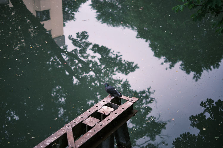 High angle view of a pigeon below the bridge