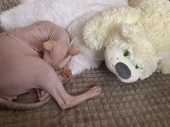 High angle view of baby sleeping on bed