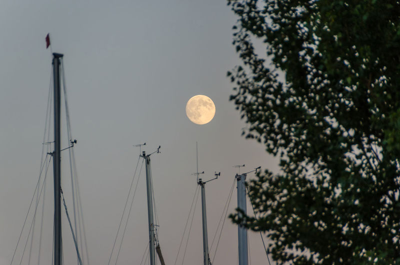Moon rising over sailboat masts in harbour with tree at the front EyeEmNewHere Harbor Harbour Sailboat Masts Sailboat In Sunset Tree Beauty In Nature Beauty In Nature Clear Sky Day Low Angle View Mast Moon Nature Nautical Vessel No People Outdoors Sailboat Sky
