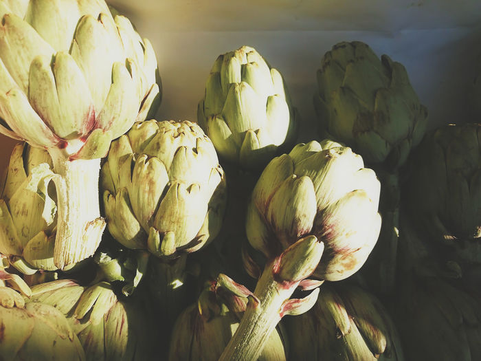 Artichoke Close-up Day Food Food And Drink Freshness Healthy Eating Ingredient No People Sunlight Textures And Surfaces Vegetable Farmer's Market Organic Living