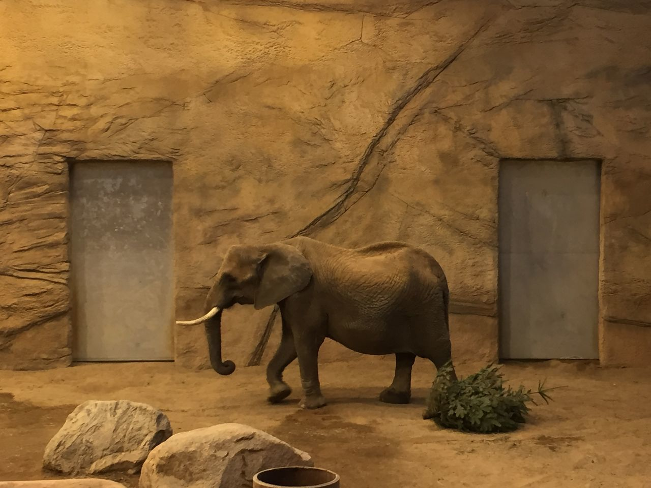 elephant, mammal, animal themes, standing, no people, animals in the wild, day, indoors, architecture, animal trunk, nature