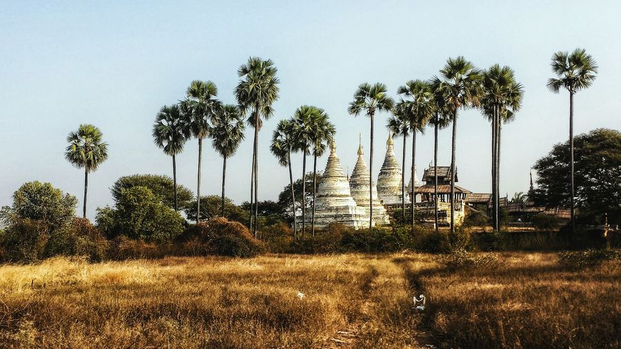 Temples and palm trees against sky