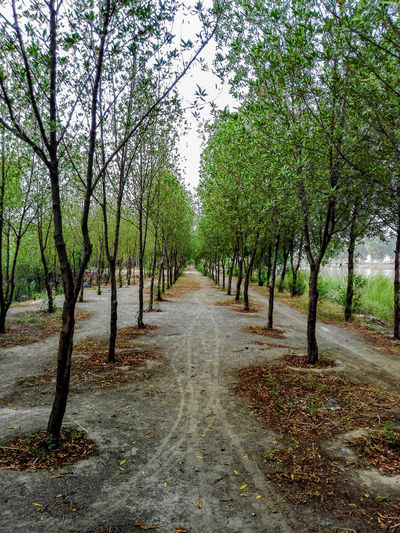 Nature Outdoors The Way Forward Growth Tranquility Shadow No People Beauty In Nature Tranquil Scene Landscape Huawei Beautiful Phone Photography Mobilephotography Eyem Vision پاکستان Pattern Greenry Trees Path In Nature Pakistan Gujranwala Spring HuaweiMate7 My Life