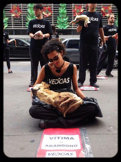 10 de Dezembro: Dia Internacional dos dereitos animais. @veddas Os animais sentem medo, dor, angustia, tristeza, solidão,forme, sede e alegria. E não estamos falando apenas de cães e gatos. Porcos, vacas, cavalos, e peixes são caes capazes de sofrer e sentir assim como nós. Vegan Save The World Popckorn
