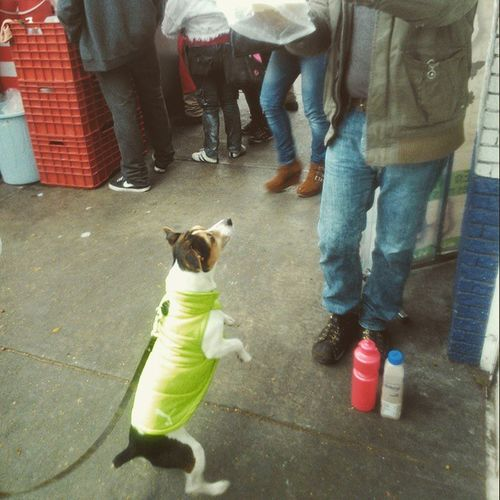 Epsilon LosHuarachesDeInsurgentes Dog DogLove Streetphotography PhotographyDog🐶